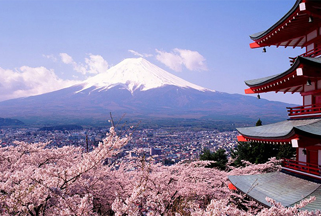 Wonderful-Sakura